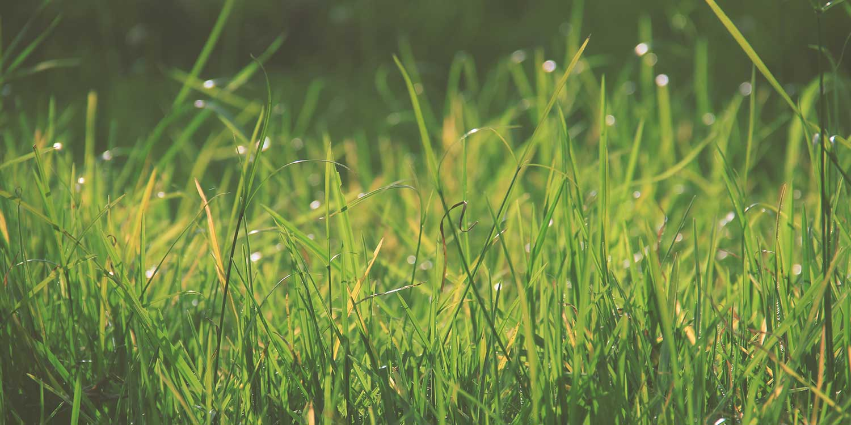 concepts of green field development